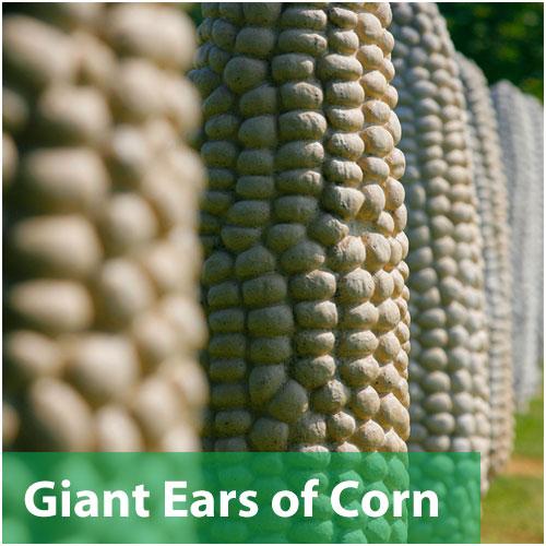 Giant Ears of Corn