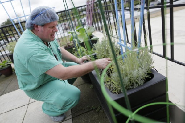 Surgical team at Dublin Methodist Hospital bonds through rooftop garden